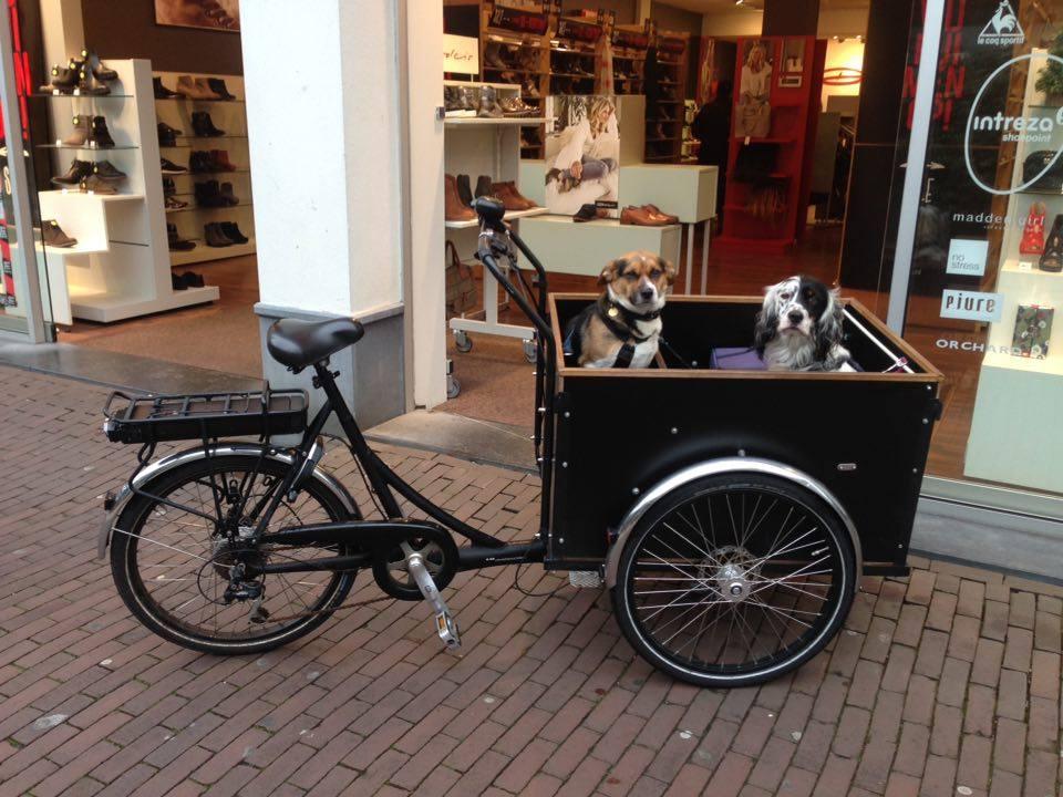 (動物を大切にする文化のあるオランダでは、店舗によってはショッピングさえ同伴可能です。)