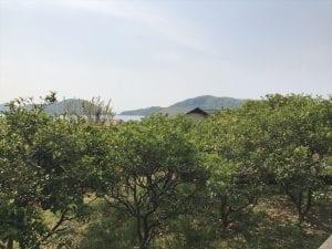 オリーブ畑(農免道路)
