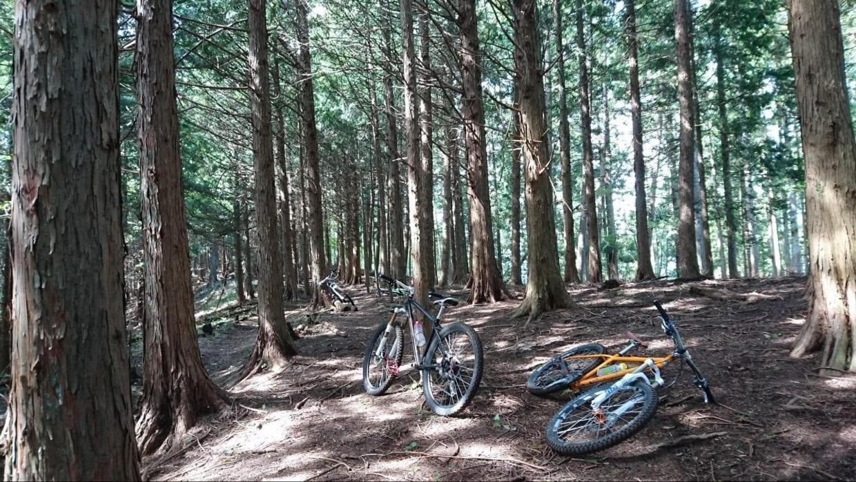 マウンテンバイク山道