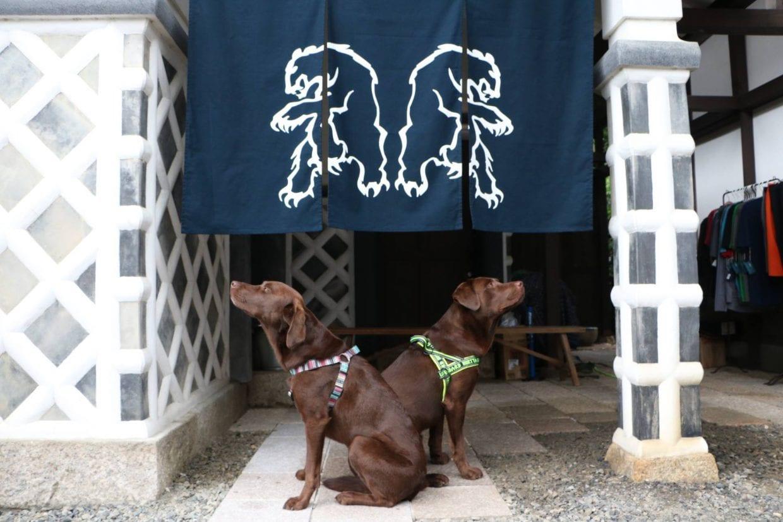 chromag_dogs