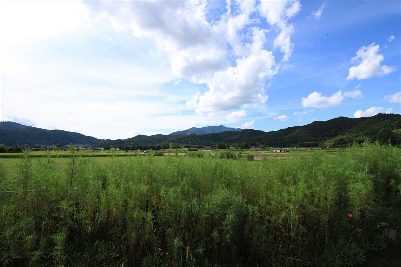 宇多野ののどかな田園風景