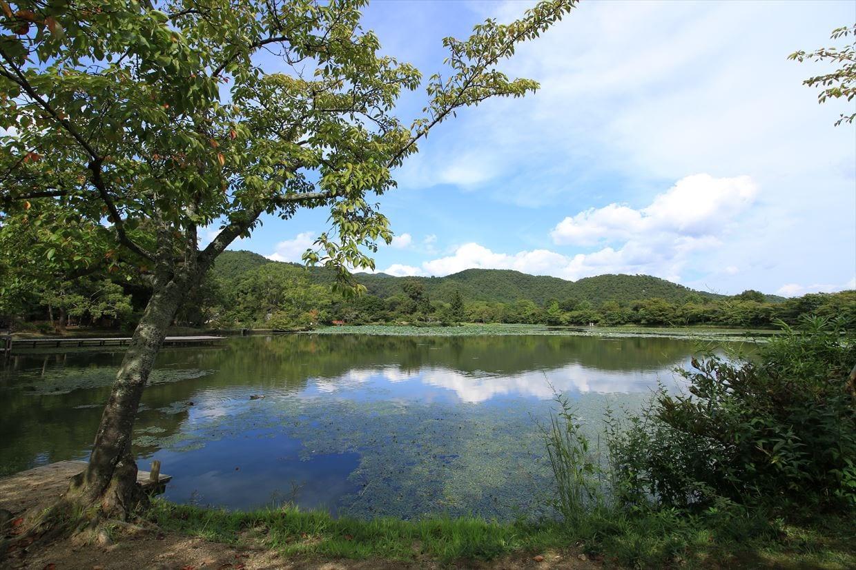 四季折々の風景を楽しめる大沢池