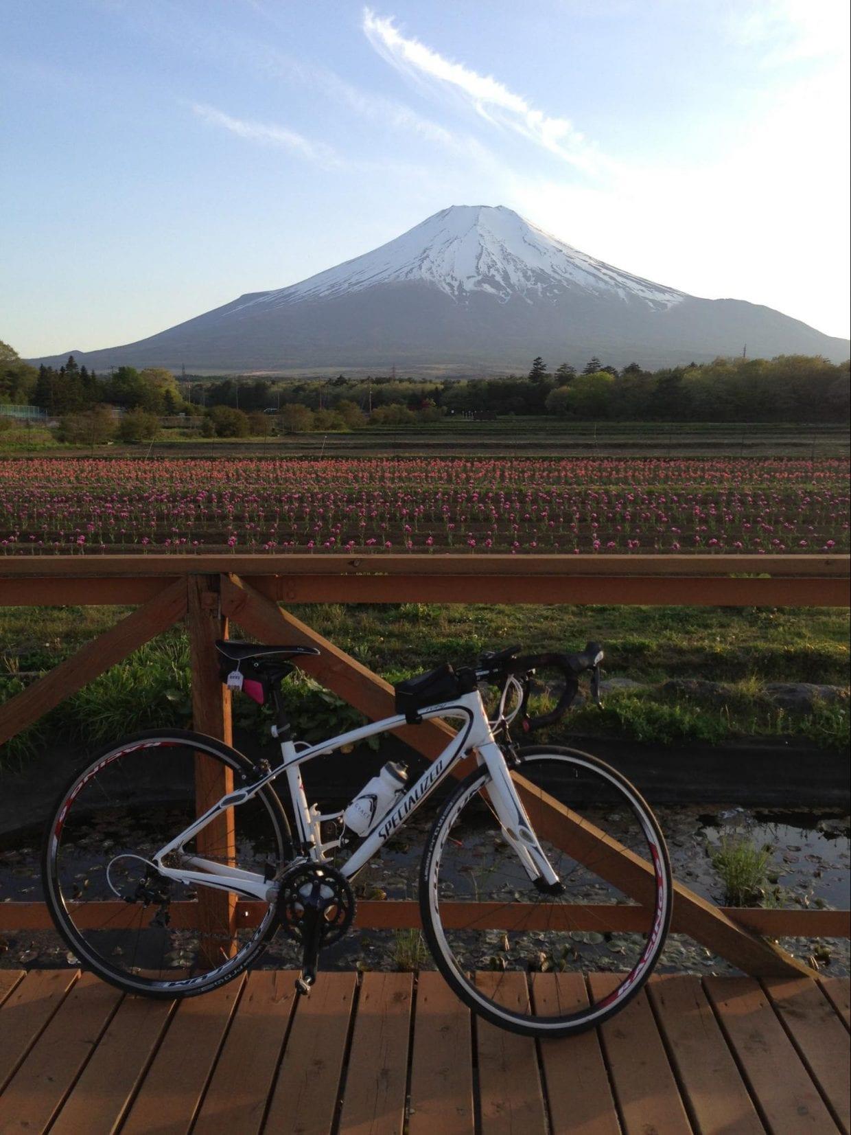 山中湖西側にある30万平方メートルの広大な公園。四季の花々と富士山の取り合わせた雄大な景色を楽しむことができます