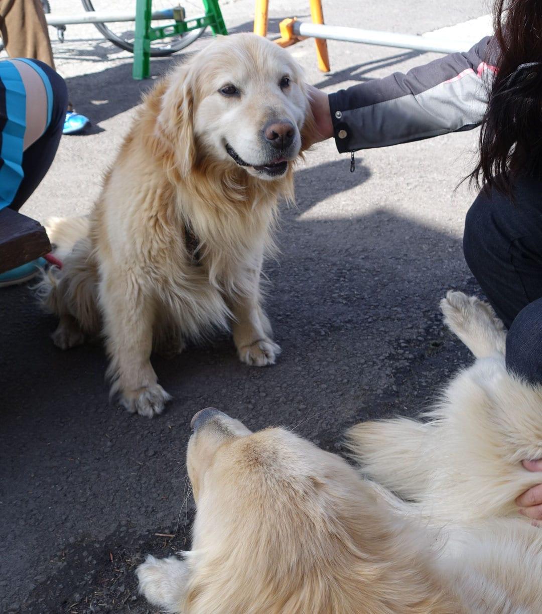 漫画にも登場する看板犬インディー君、ルーカス君。