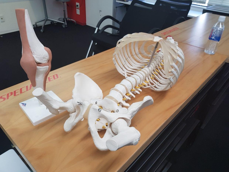 ▲説明のために用意されていた胴体部分と膝の模型。なんだかものものしい・・・
