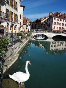 水辺のきれいな街アヌシー市内。観光客がとても多くバカンスを過ごす街としてフランスでは有名です。心なしか白鳥も オシャレに見えるような。