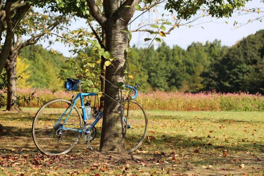 秋 サイクリング