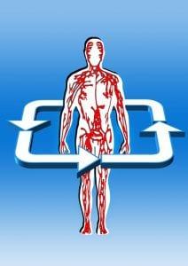 血行が促進されて筋肉や肝臓が血液にたまった乳酸を処理しやすくなる