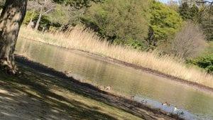 見沼自然公園にはファミリーが沢山。池にはカモや鳩が優雅に泳いでいた。。。