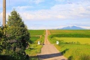 広大な畑作が広がる小清水町の丘陵地帯。photo:神楽坂つむり