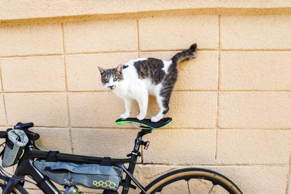 運が良ければ島猫に会うことも。 photo:神楽坂つむり
