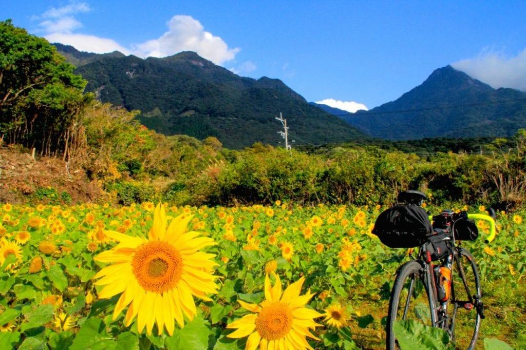 12月の写真です。もう一度書きます。12月です。屋久島、ワンダーランドです。さすが一つの島に四季が詰まっていると言われるだけあります。photo:神楽坂つむり