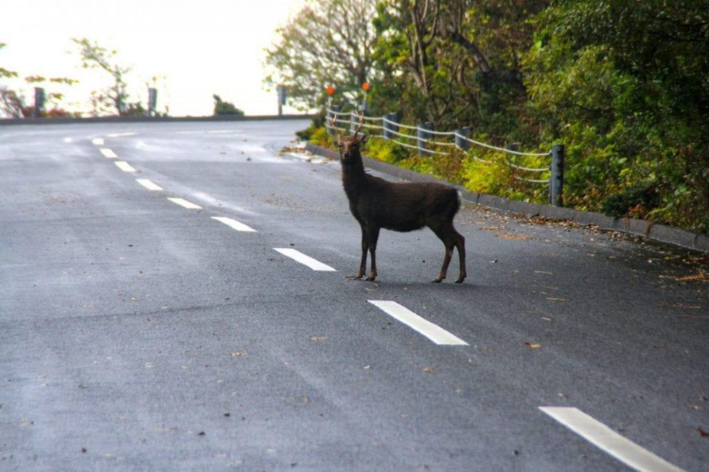 動物は普通に出てきます。photo:神楽坂つむり