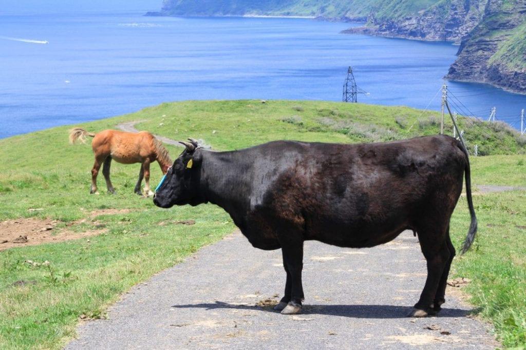 牛です。すごく・・・・大きいです・・・・。photo:神楽坂つむり